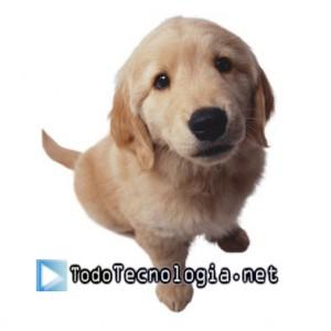 perro1 copia